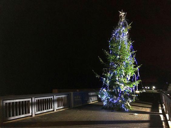 Ёлка на променаде города Светлогорска в новогоднюю ночь. Фото: Evgenia Shveda