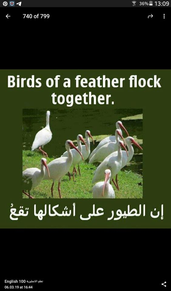 Birds Of A Feather Flock Together English Language Course English Vocabulary Learn English