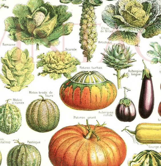 Kitchen Art Vegetables Print Botanicals Kitchen Art: 1948 Vintage Kitchen Decor Vegetable Poster Antique
