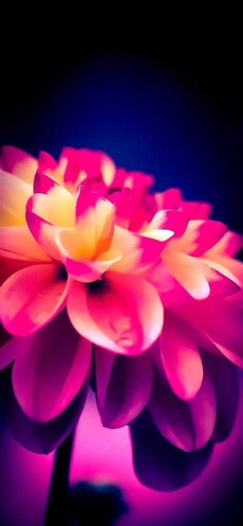 Vivid Colors Iphone Wallpaper Pack Pink Wallpaper Iphone Ios 11