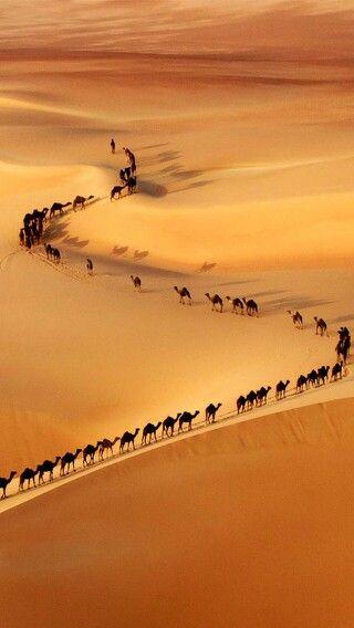Camellos en busca de agua