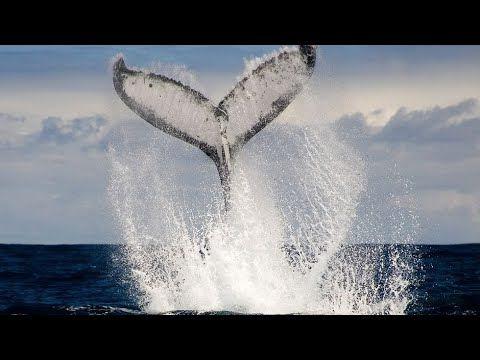 Wo Die Wale Zur Welt Kommen Wale Welt Wal