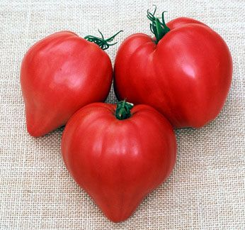 Image result for Oxheart tomato