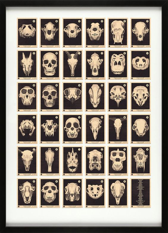 Skulls A to Z....Cool picture for a Man Cave