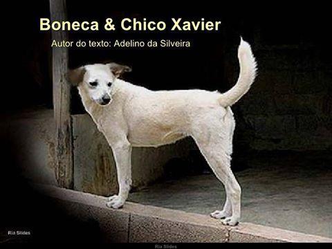 http://wwwblogtche-auri.blogspot.com.br/2016/03/boneca-chico-xavier-cronica.html blogAuriMartini: Boneca & Chico Xavier - Crônica