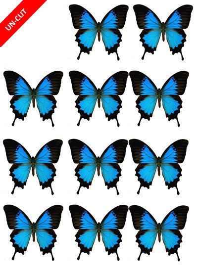 12 x Edible Blue Butterflies uncut wafer / rice paper cupcake cake toppers 6*7cm