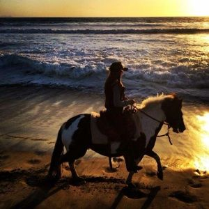 San Diego Beach Rides, Horse Rentals & Wagon Rides