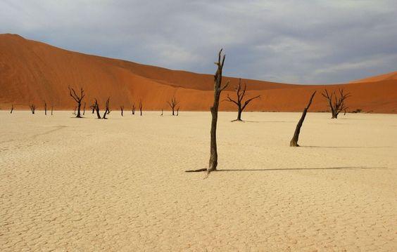 Dead Vlei en Namibie : Les plus étonnantes forêts du monde - Linternaute