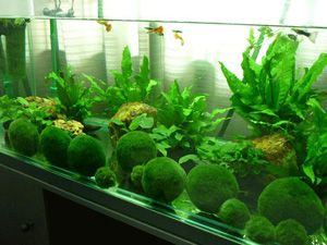 Fish-etc. Aquarium Specialist Shop Tropical Fish, African Cichlids ...