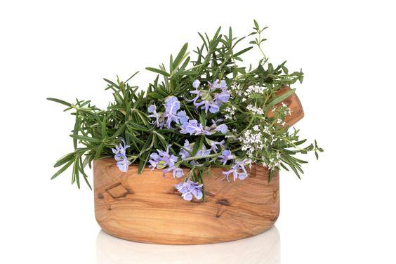 ***¿Cómo Plantar Romero?*** Tu jardín de hierbas no estaría completo sin esta delicia. ¡Aprende cómo plantar romero y dale un sabor especial a todos tus platillos!.....SIGUE LEYENDO EN...... http://comohacerpara.com/plantar-romero_12813h.html