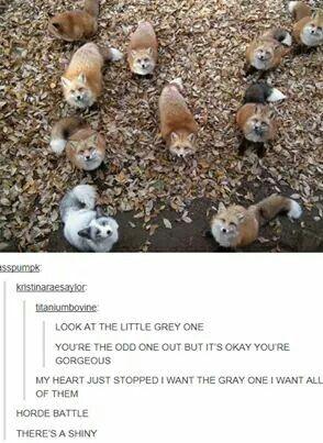 Shiny Fox :3 THROW ALL THE ULTRA BALLS AT IT!!
