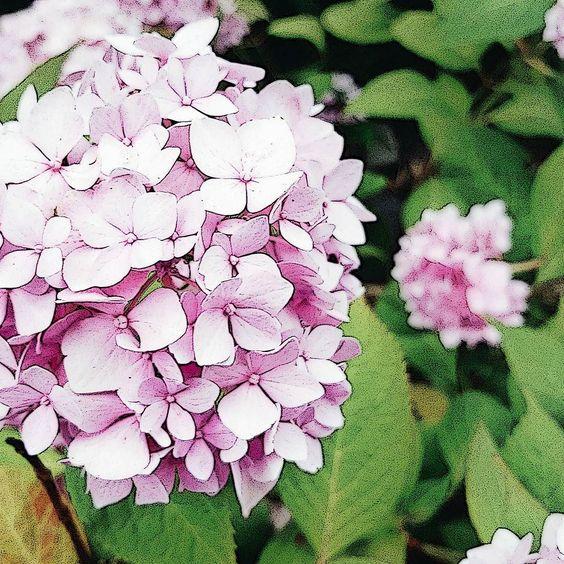 Wochenende im Grünen  #flower #weekend #hortensien #Wochenende #blume #blüten #brandenburg #stahnsdorf