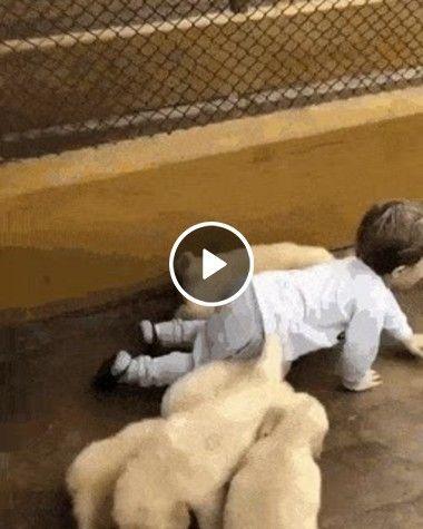 cachorrrinhos brinca com criança