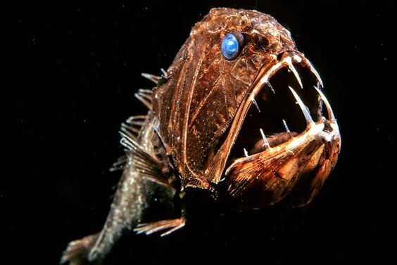 Длиннорогий саблезуб (англ. Fangtooth, лат. Anoplogaster cornuta).