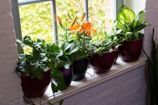 How To Get Rid Of White Fuzzy Moldy Potting Soil Potting Soil Cat Safe Plants Soil