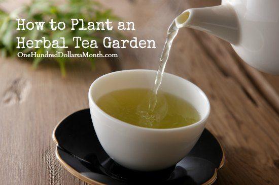 Herbal teas, Teas and Plants on Pinterest