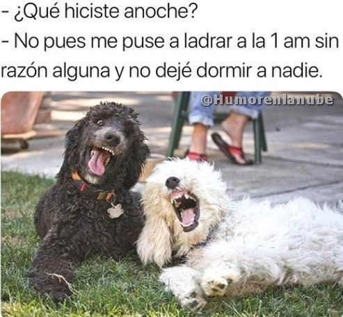 Photo Http Videowhatsapp Net Photo 345 Html Vwhatsapp Risa Funny Spanish Memes Dog Jokes Marvel Memes