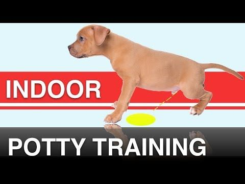 148 How To Indoor Potty Train Your Dog With The Potty Training