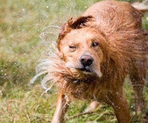 c3d686670915deb03d3244041e8d78b8 - How To Get Cat Hair Off Without Lint Roller