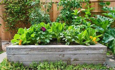Plant Names Explained And Growing Bush Tucker In 2020 Summer Vegetables Garden Raised Garden Beds Raised Garden