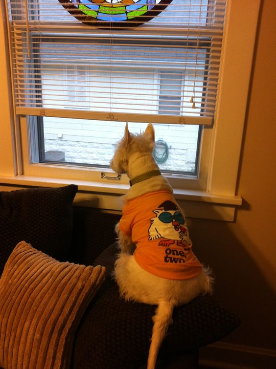 Oliver playing watchdog.