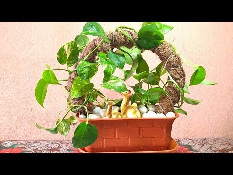How To Grow Money Plant Money Plant Growing Idea Pothos Growing Idea Youtube Money Plant Indoor Money Plant Plants