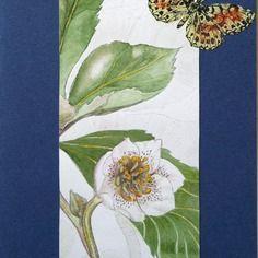 Grande carte double anniversaire fête automne art dessin original l'héllébore blanche