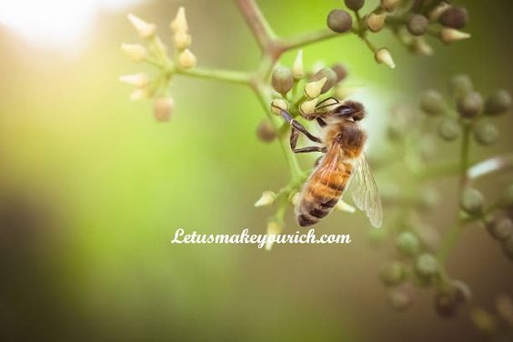 Hope is the only bee that makes honey without flowers. ―Robert Green Ingersoll