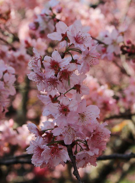 Bosque das Cerejeiras                                                                                                                                                      Mais