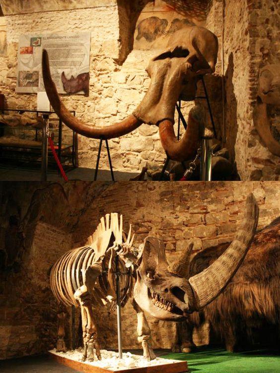 El Museo del Mamut #museos, #arte. www.otrosmuseos.com #barcelona