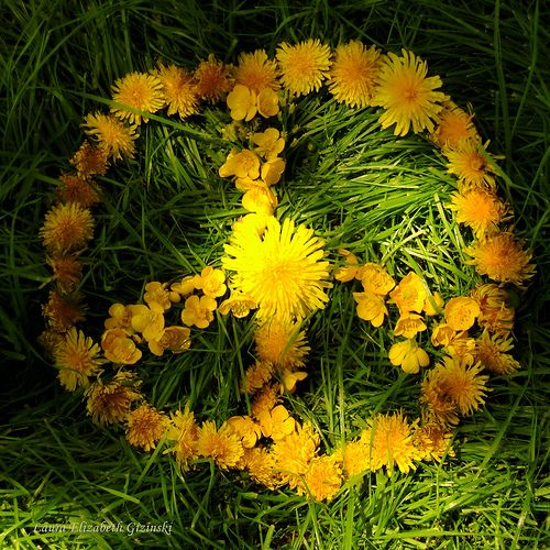 Peace dandelions and flower on pinterest for Dandelion flowers and gifts