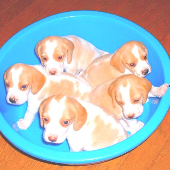 Bowling for Puppies!