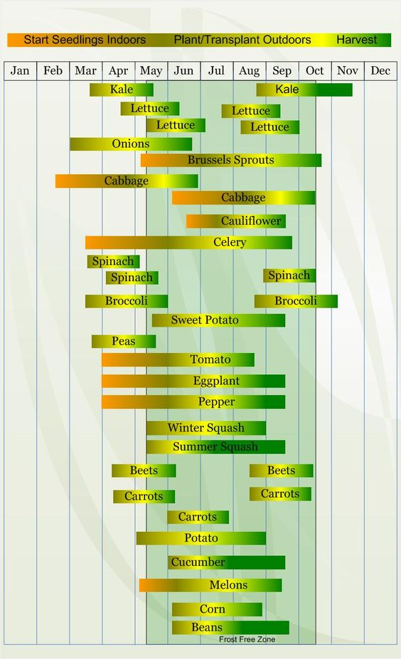 Calendar vegetables and plants on pinterest for Vegetable growing guide