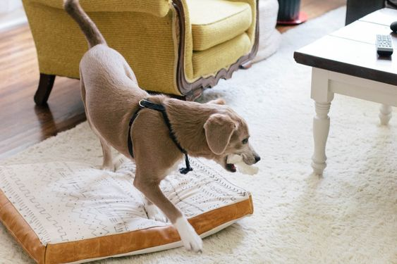 toujours rooney: Cuir et Can Dog Bed   bricolage