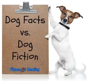 Does a tail wag always mean a happy dog? Are a dog's sloppy kisses a surefire sign of its affection? Since dogs are unable to verbalize what they are really thinking, there are nonverbal cues that we can learn from and respond to accordingly. We separate the dog facts from the dog fiction. #dogs