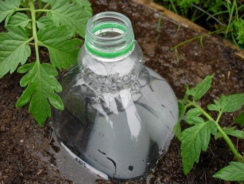 Check out this DIY Drip Irrigation System made from plastic bottles!
