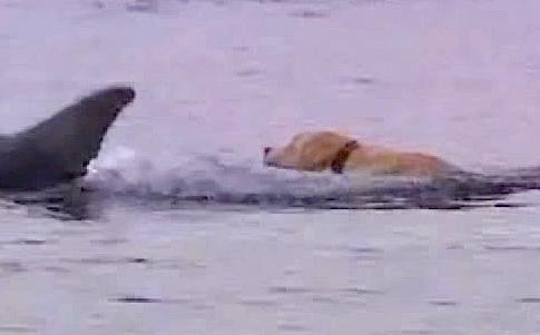 Friendly Dog Helps Grieving Dolphin Swim Away Her Sadness