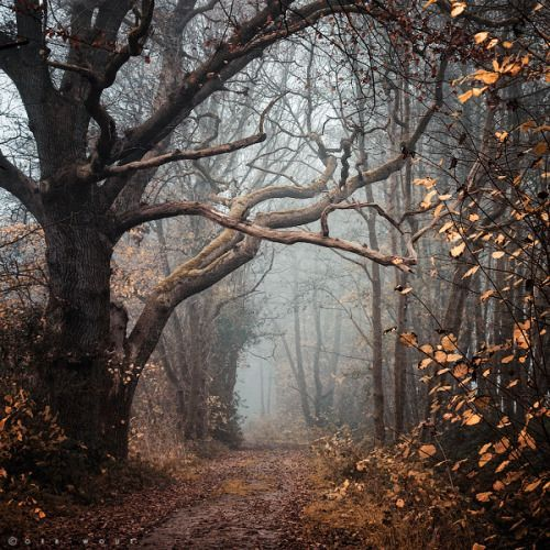 Of Of The Most Beautiful And Scary Forests Right Out Of Sleepy Hollow Scenery Nature Photography Landscape