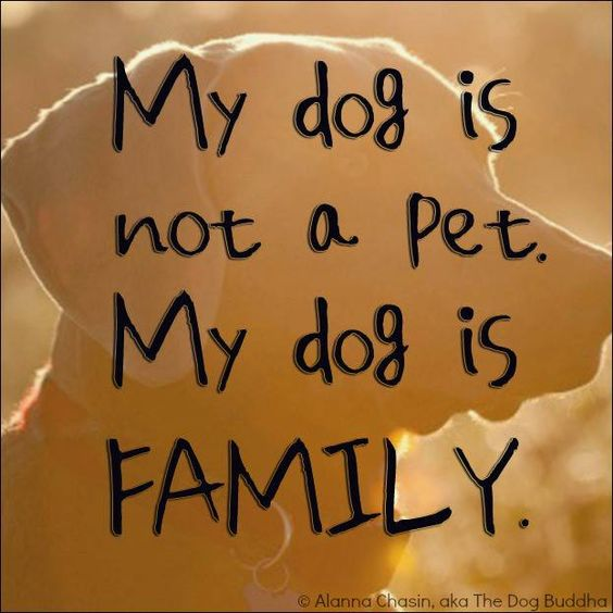 My pet is my best friend essay introduction ?