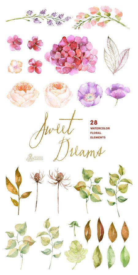 Süße Träume: 28 Aquarell Elemente Hortensien Rosen von OctopusArtis