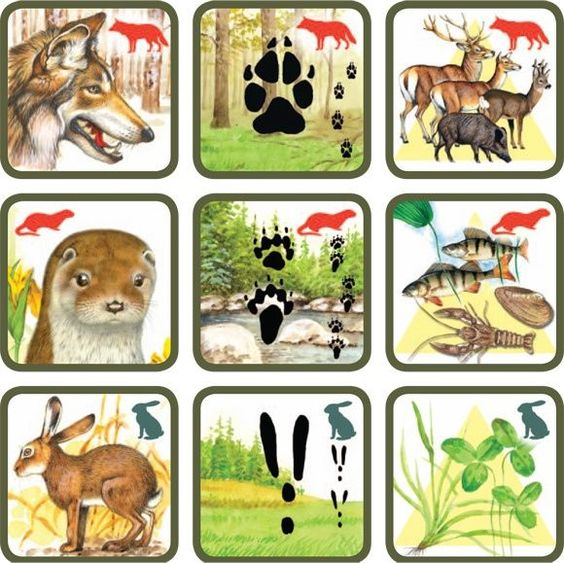 CULTUURHISTORISCH LANDSCHAP Natuurspel voor kleuters, zoek het dier bij zijn sporen en voedsel no.6, free printable