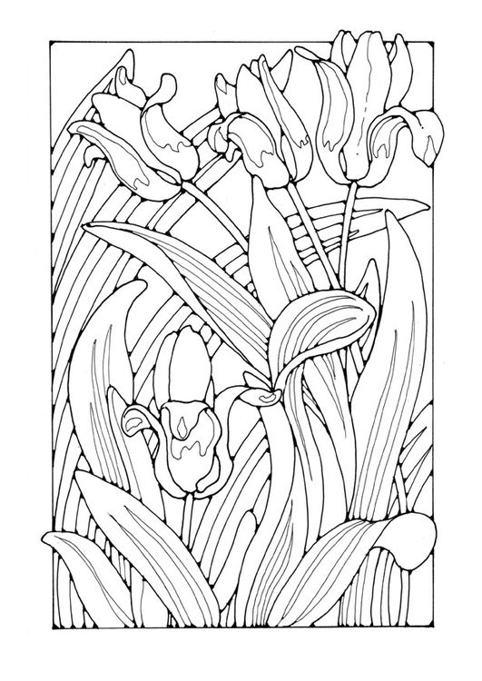 Coloring page tulips | Flower Coloring Pages | Pinterest ...