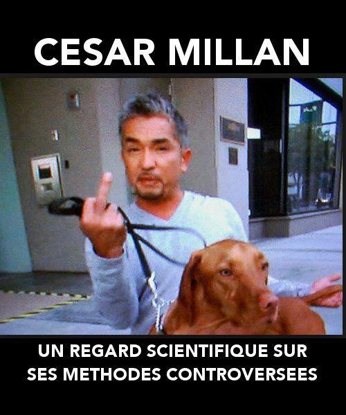 Un regard scientifique sur les méthodes controversées de Cesar Millan | Chien Matin