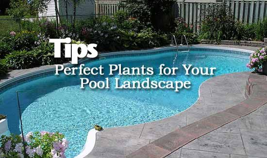 Perfect Plants And Tips For Pool Landscaping Landscaping
