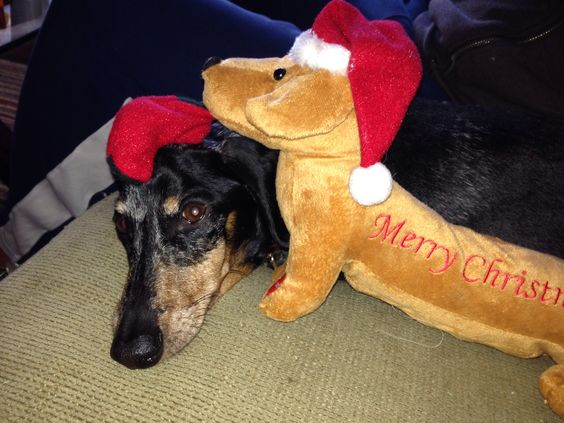 Harpie waiting on Santa
