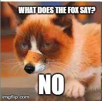 What does the fox say? No!