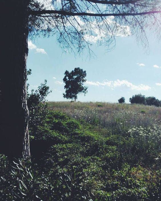 Sbriciando. Buonanotte anime belle.  Edit with @vscoF2  #buonanotte #goodnight #italia #italy #campania #salerno #vsco #vscocam #vscoitaly #landscapephotography #landscape #landscape_captures #landscape_lovers #photography #photooftheday #photo #nature #followme #seguitemi #amazing #awesome #bestoftheday #beautiful #sky #tree #travelphotography #summer