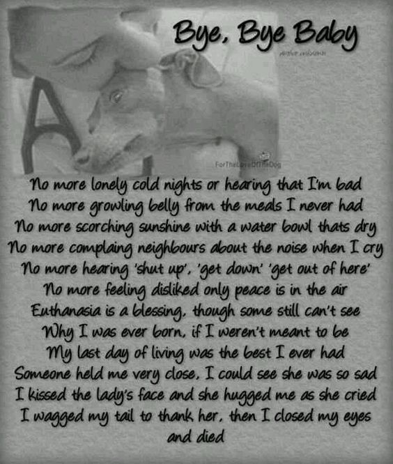For all of the forgotten abused pets-so sad. get some tissues...ADOPT! NEUTER! FOSTER! STOP THIS KILLING!!