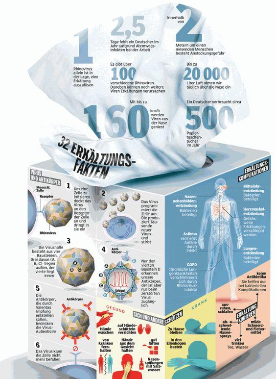 Infografik: Fakten zu Erkältung (Husten, Schnupfen, Fieber)