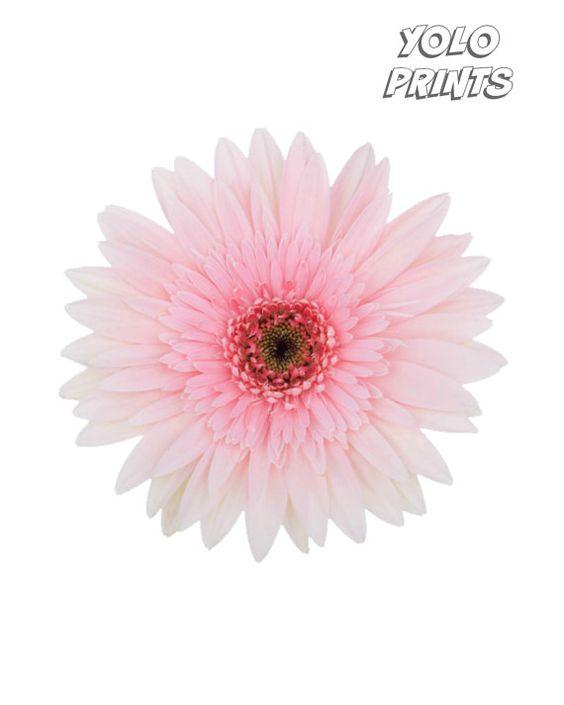 Beautiful Pink Daisy Print